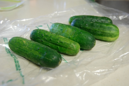 pickle cucumbers